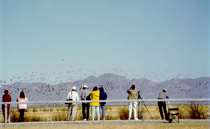 Apache Station Wildlife Viewing Area